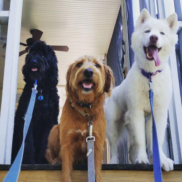 Dogstar Dog Walking Rates