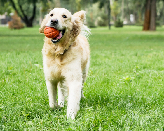 dogstar-dog-with-a-ball